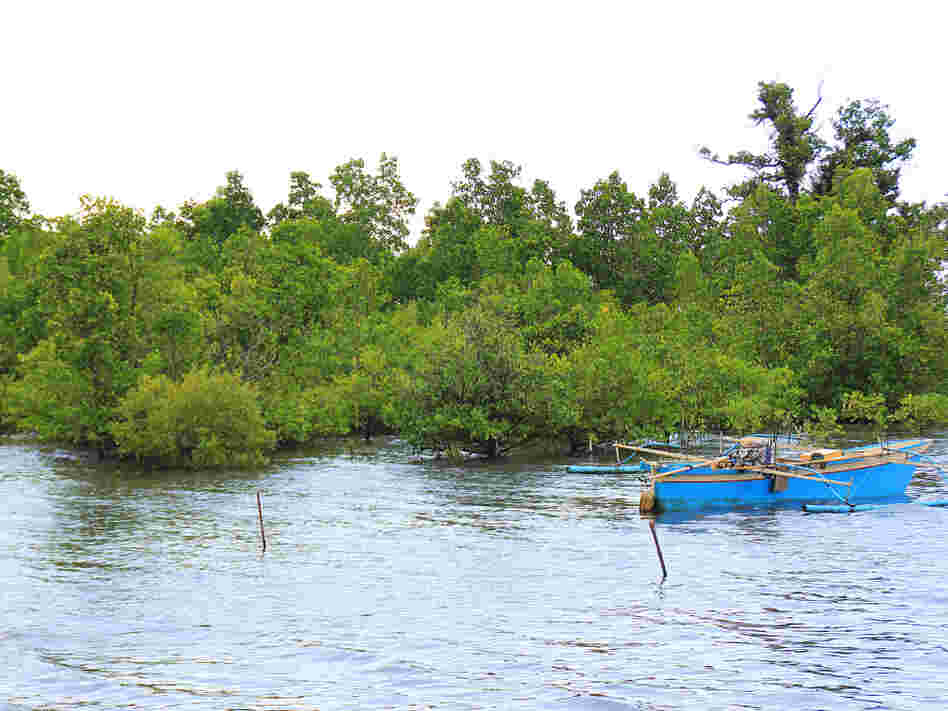 A rising tide submerges mangrove trees and lifts local boats in Tiwoho Village in Indonesia's North Sulawesi province. Two decades ago, locals began efforts to revitalize the area's mangroves.