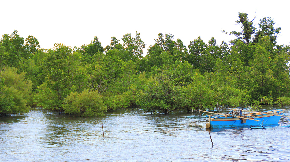 A rising tide submerges mangrove trees and lifts local boats in Tiwoho Village in Indonesia's North Sulawesi province. Two decades ago, locals began efforts to revitalize the area's mangroves. (NPR)