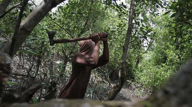 A man gathering firewood to sell cuts down mangrove trees in the coastal area of Medan city on Indonesia's Sumatra island on Jan. 31. The country, which has one-quarter of the world's mangroves, is losing them at a rate of 6 percent a year. The coastal forests play important ecological and environmental roles. (AFP/Getty Images)