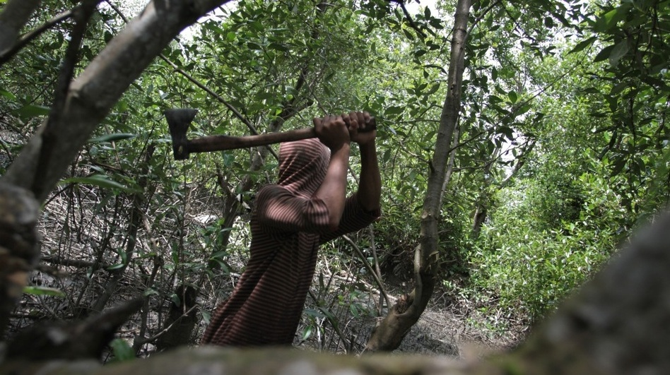 A man gathering firewood to sell cuts down mangrove trees in the coastal area of Medan city on Indonesia's Sumatra island on Jan. 31. The country, which has one-quarter of the world's mangroves, is losing them at a rate of 6 percent a year. The coastal forests play important ecological and environmental roles.