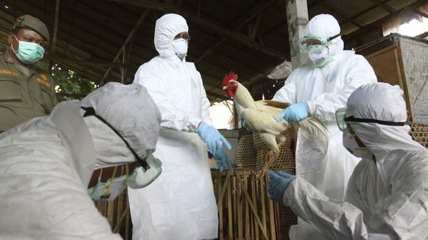 Balinese government officials prepare to cull chickens as a precautionary measure to prevent the spread of bird flu at a market in Denpasar on April 26.