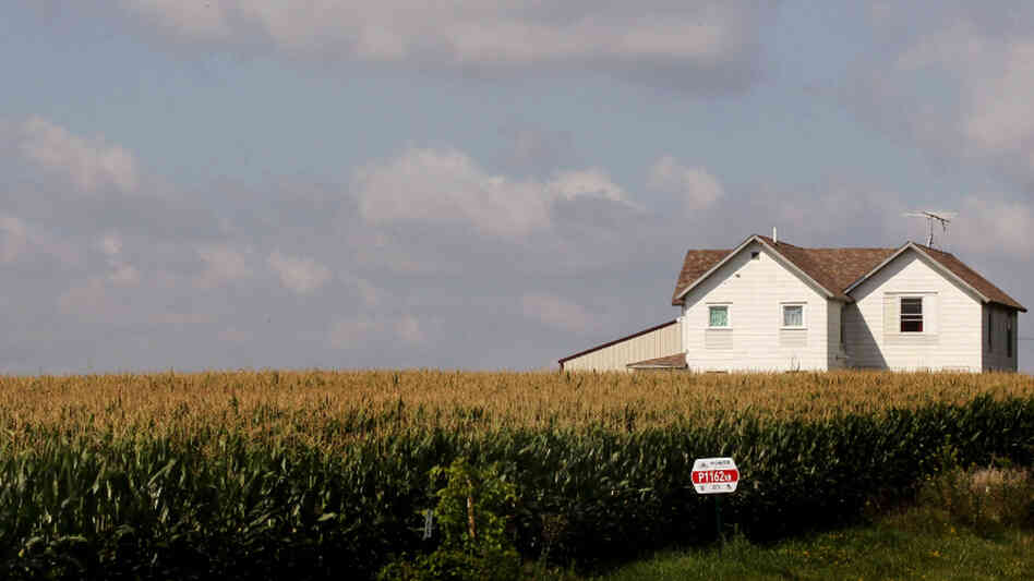 This year, U.S. corn farmers have planted more acres of the crop than a