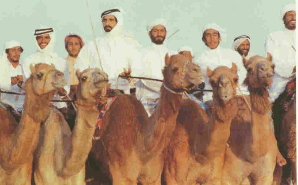 Sheikh Mohammed bin Rashid Al Maktoum, the prime minister of the United Arab Emirates and the consitutional monarch of Dubai, leads a camel riding party in his youth.