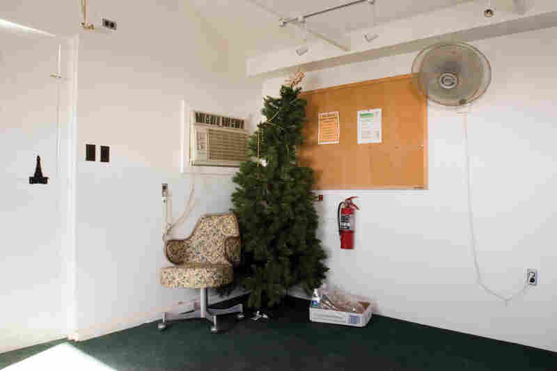 Christmas Tree, Camp America, 2006