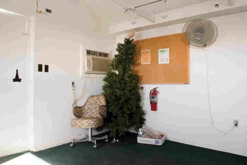 Christmas Tree, Camp America, 2006