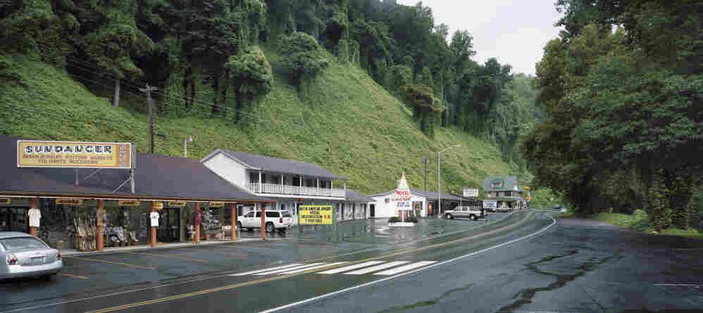 Kudzu lines a sleepy roadside in Cherokee, N.C., 2009.