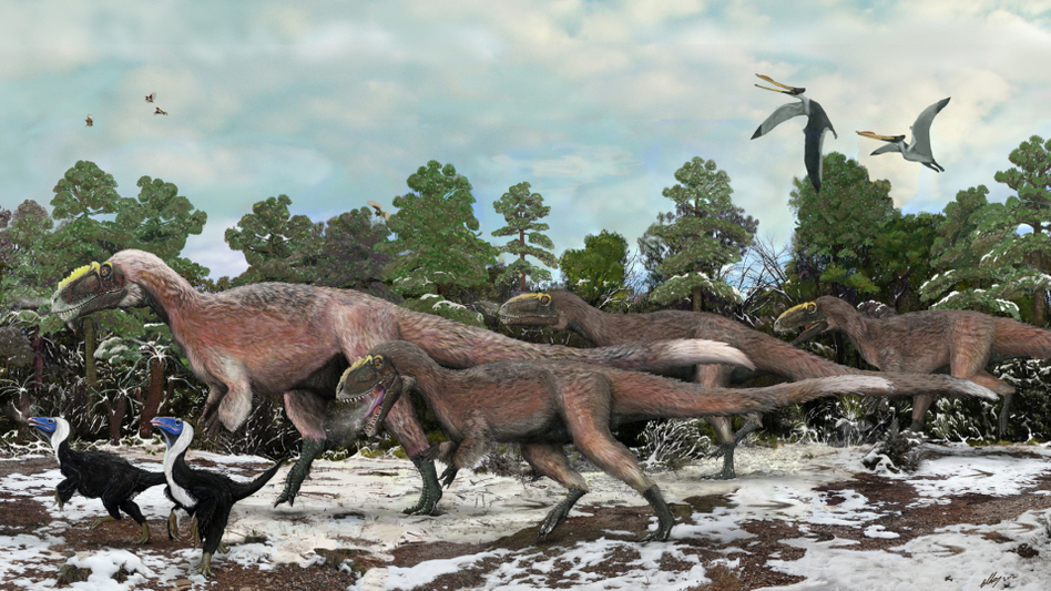 An artist's impression of a group of Yutyrannus. The 30-foot-long dinosaurs were covered with downy feathers — likely to keep the animals warm. (Nature)