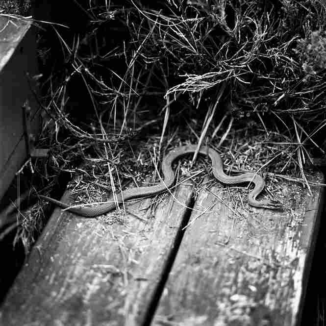 """Snake No. 7: """"For a while, there was always a snake sunning on the dock steps at my grandmother's house,"""" he says. """"This image was made on Thanksgiving Day."""