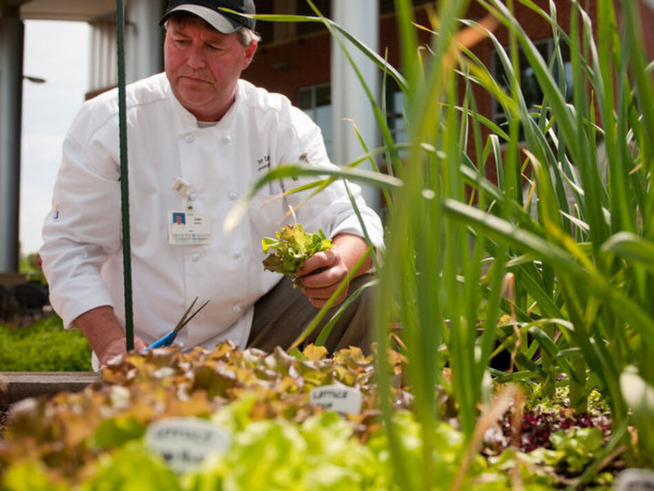 Executive chef Tony DeWalt picks some lettuce from the Fauquier Hospital's culinary healing garden. (John Rose)