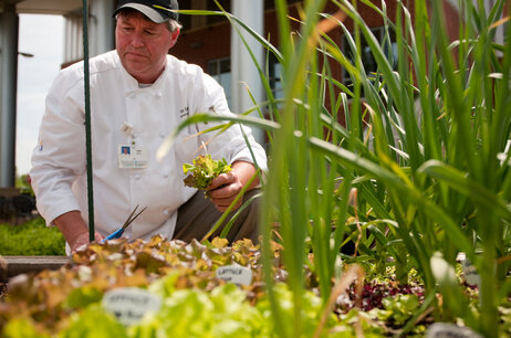 "Executive Chef Tony DeWalt picks some lettuce from Fauquier Hospital's ""culinary healing garden."""