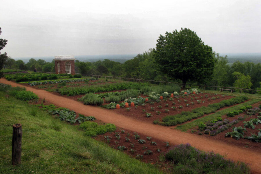 Exceptional After Jefferson Left The Presidency, He Planted A Retirement Garden At  Monticello That Is 300