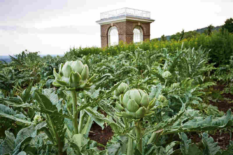 Jefferson reserved a prime location in his garden for his artichokes. According to Hatch, in the early 19th century, artichokes were a gentleman's vegetable — a prestigious thing to bring to the table.
