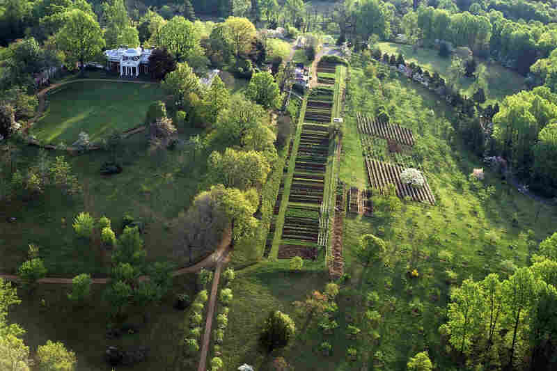 Thomas Jefferson's garden at Monticello was uniquely American because it served as a kind of Ellis Island for garden vegetables around the world.