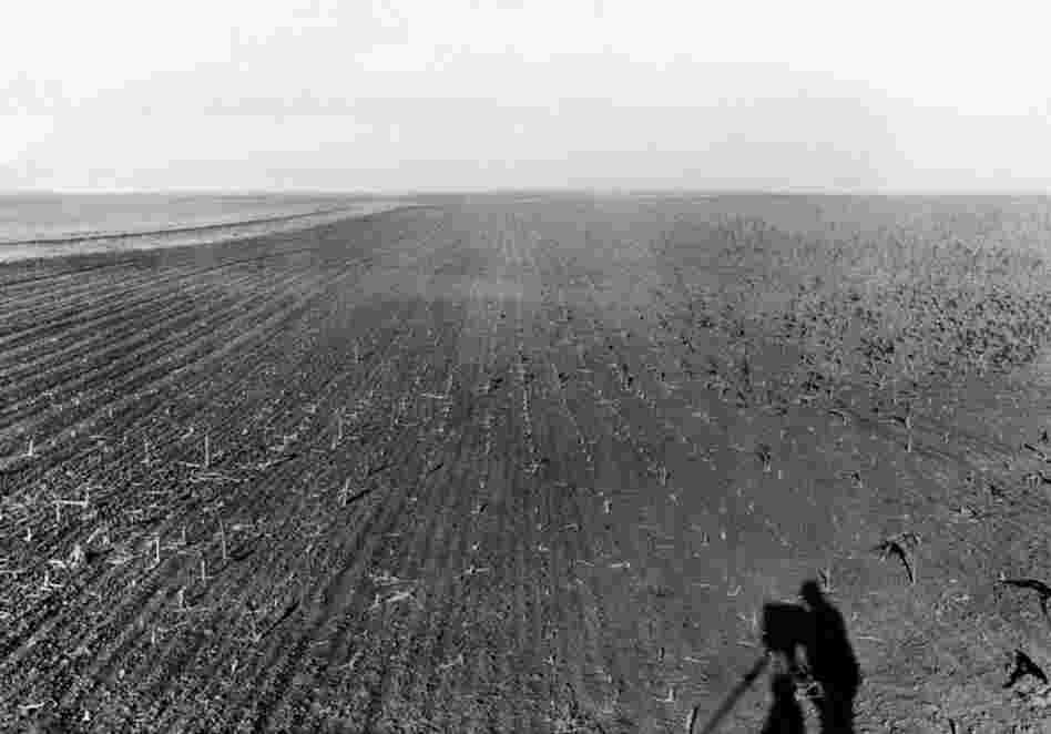 "July 30, 1931: A field of crops ravaged by grasshoppers in the Great Plains. According to an Associated Press article published a few days earlier, one South Dakota farmer, ""hearing that turkeys would eat the grasshoppers, sent his flock into the fields."" In something of a David-and-Goliath tale, the turkeys came back without feathers."