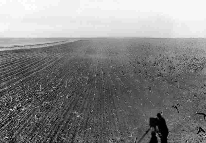 """July 30, 1931: A field of crops ravaged by grasshoppers in the Great Plains. According to an Associated Press article published a few days earlier, one South Dakota farmer, """"hearing that turkeys would eat the grasshoppers, sent his flock into the fields."""" In something of a David-and-Goliath tale, the turkeys came back without feathers."""