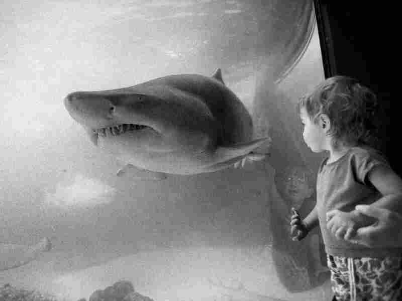 """July 21, 1993. """"Where Sharks Face Off With Gentler Souls"""" was the headline on an article published about the New York Aquarium in Coney Island. """"If you were to mix one drop of blood with a hundred million drops of salt water,"""" the reporter noted, """"a shark could detect that drop of blood as far as a quarter mile away."""""""