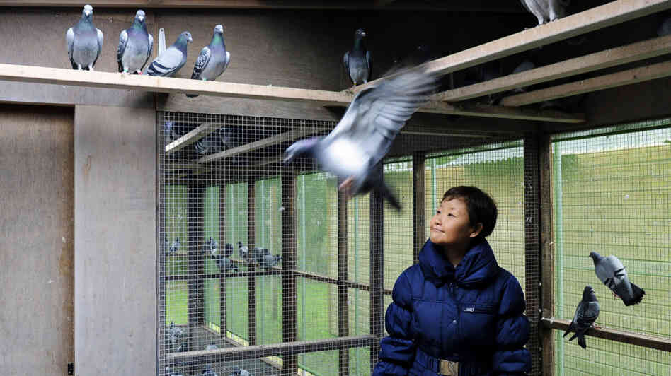 Chinese buyers are driving up the prices of racing pigeons to astronomical levels. One buyer paid $328,000 for a single bird earlier this year. Belgium, however, remains the center of pigeon-b
