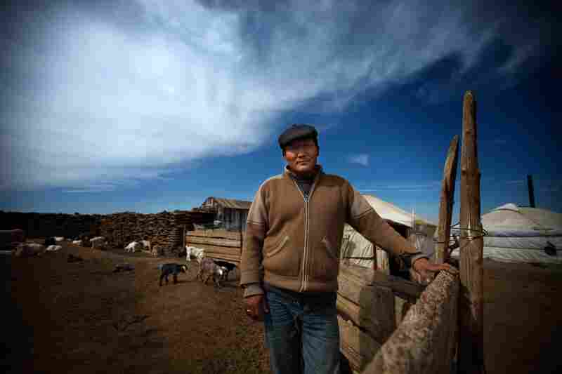 Bat-Erdene Badam stands inside his animal corral, made of wood and compressed animal dung. He says none of his children are interested in continuing to work as herders.