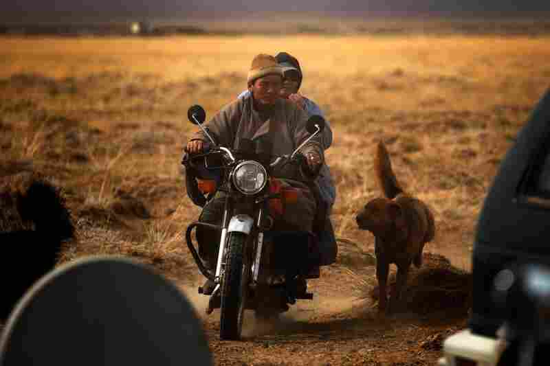 A veterinarian rides in on a motorcycle to check on the family's animals.