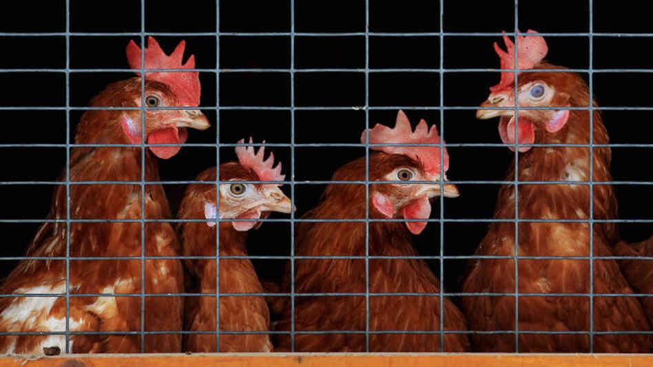 Do complex Wall Street transactions ever do anything to help average people? To answer that question, we consider the case of an imaginary company, Chickens LLC, that's looking to grow.