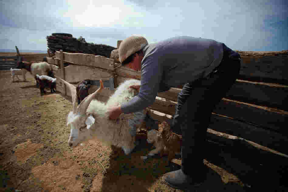Bat-Erdene Badam's family raises sheep, goats and camels in the South Gobi region of Mongolia. But his three children have no interest in continuing the family business.