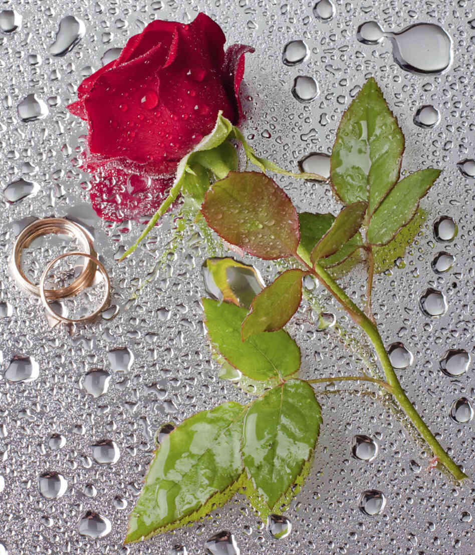 Rose with wedding rings.