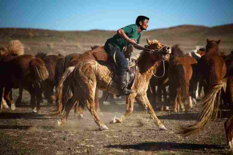 The cowboys in Mongolia — where horses were first domesticated — are considered some of the best horsemen in the world. Mongolian horses are shorter and furrier than Western versions. It's another part of traditional Mongolian life that is fading away.