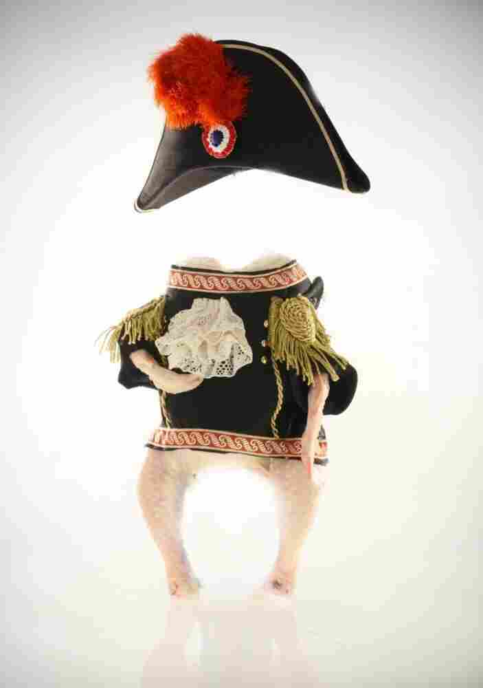 A chicken dressed like Napoleon