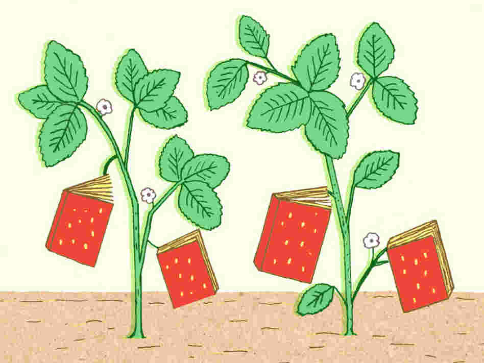Illustration: Strawberries shaped like books grow in a garden.