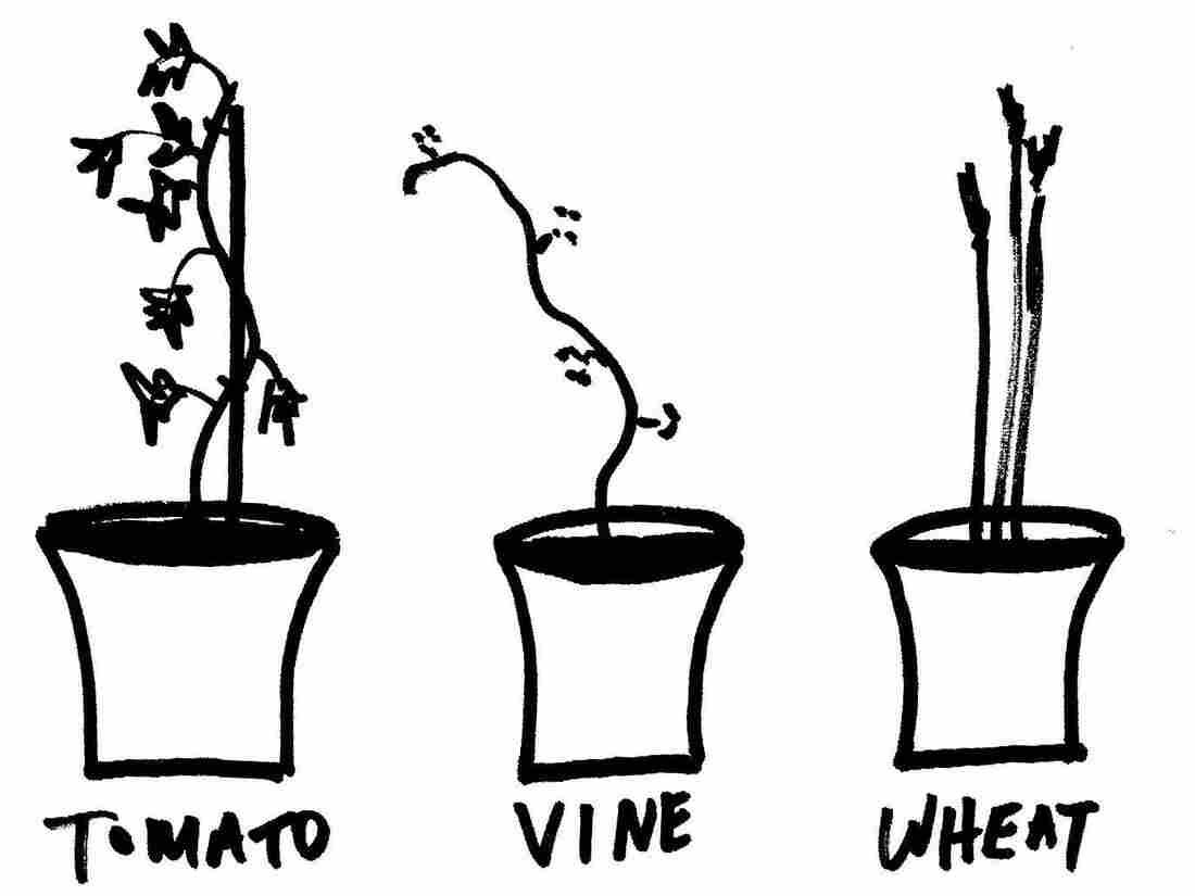 Plant 5