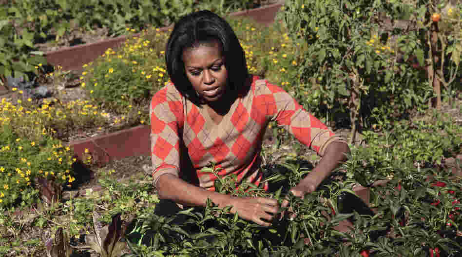 First lady Michelle Obama tends to the presidential garden during the third annual White House kitchen garden fall harvest in October 2011. The last vegetable garden planted at the White House was Eleanor Roosevelt's victory garden.