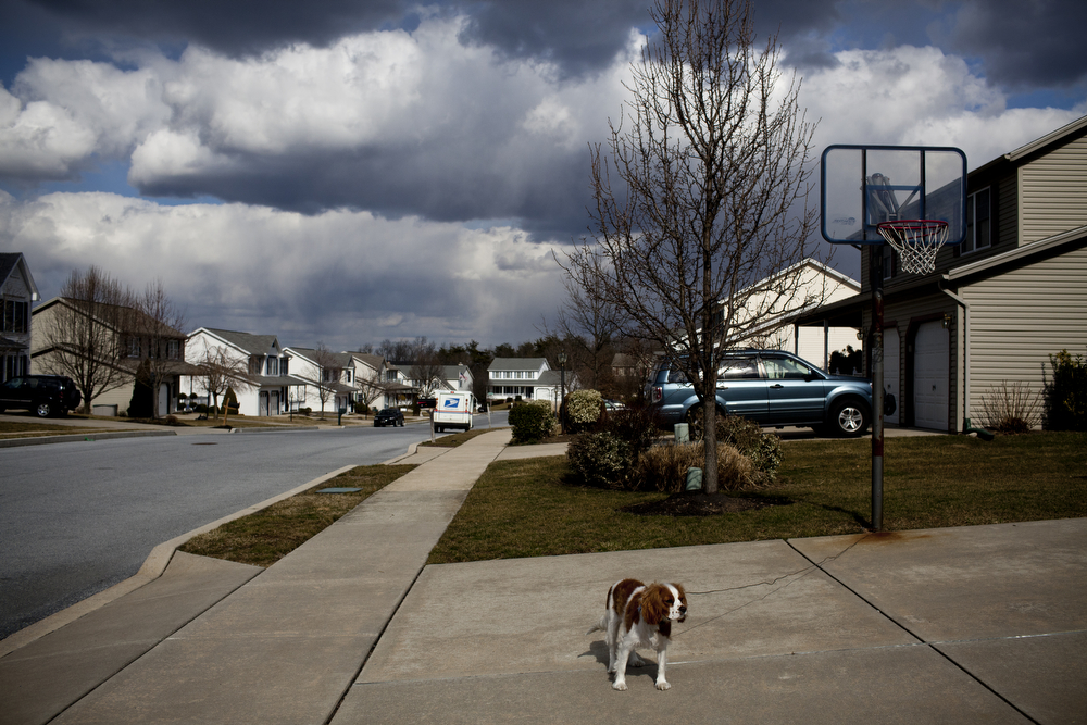 "Chloe, the Martins' Cavalier King Charles Spaniel, stands in the family's driveway. ""Hopefully they will learn how to take care of someone else, like me ... when I'm old,"" says David of his children."