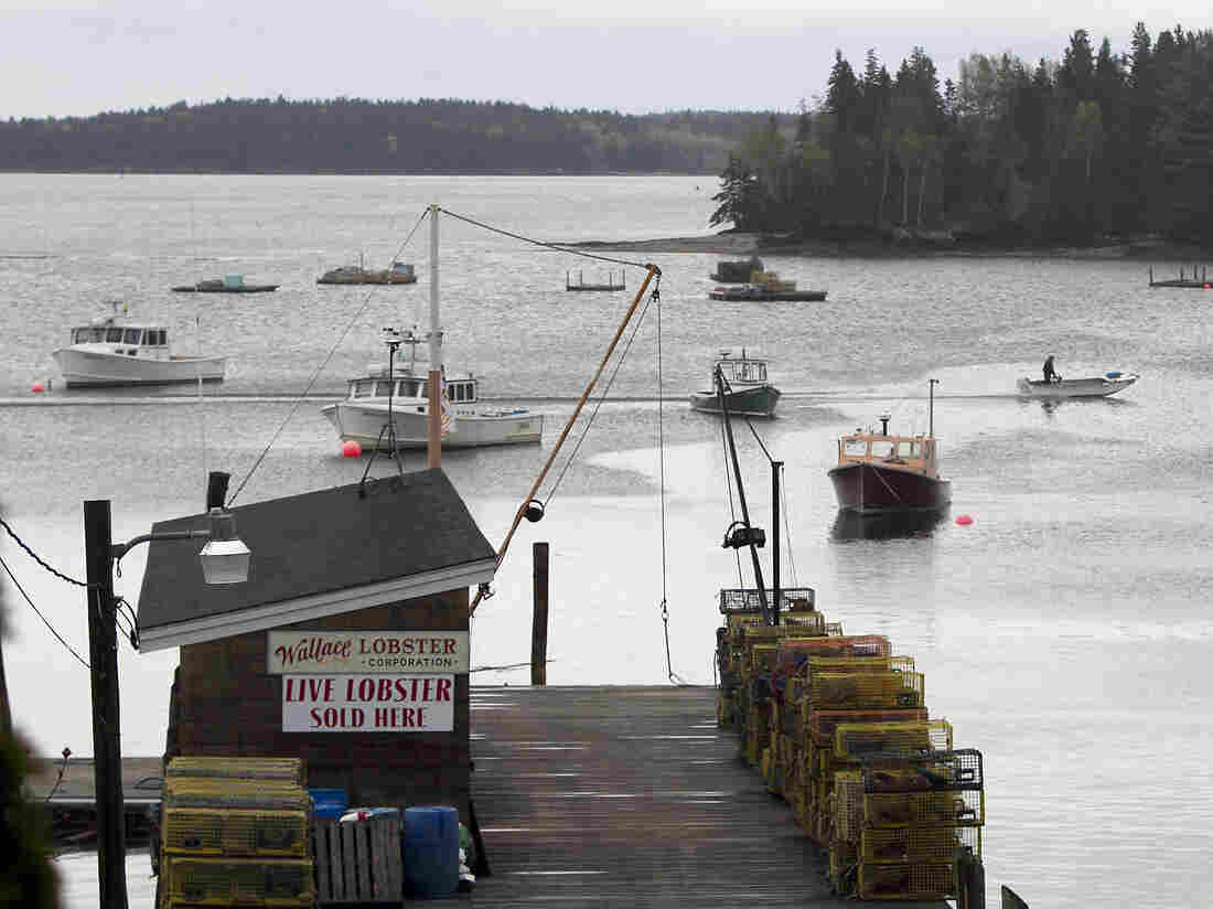 Lobster boats in Maine have been pulling up soft-shell lobsters strangely early in the season.