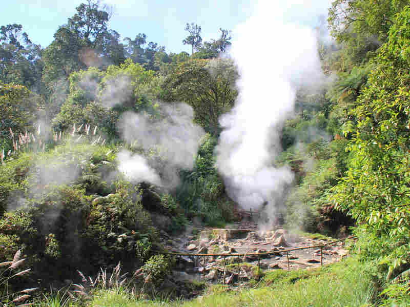 Geysers puffing steam and bubbling, sulfurous hot springs are plentiful in the Kawah Kamojang geothermal field in West Java. The field is located in a caldera, the crater of a volcano that has erupted and collapsed.