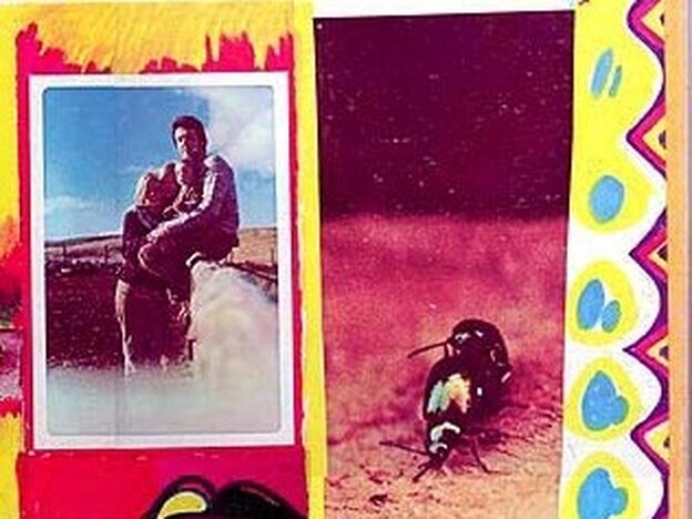 Copulating beetles on the back cover to Paul and Linda Mc