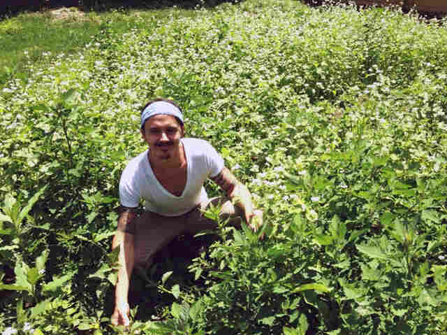 The lawn of Nashville yoga instructor James Alvarez is being taken over by buckwheat.
