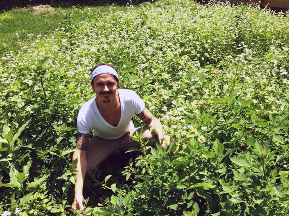 The lawn of Nashville yoga instructor James Alvarez is being taken over by buckwheat. (Blake Farmer/Nashville Public Radio)