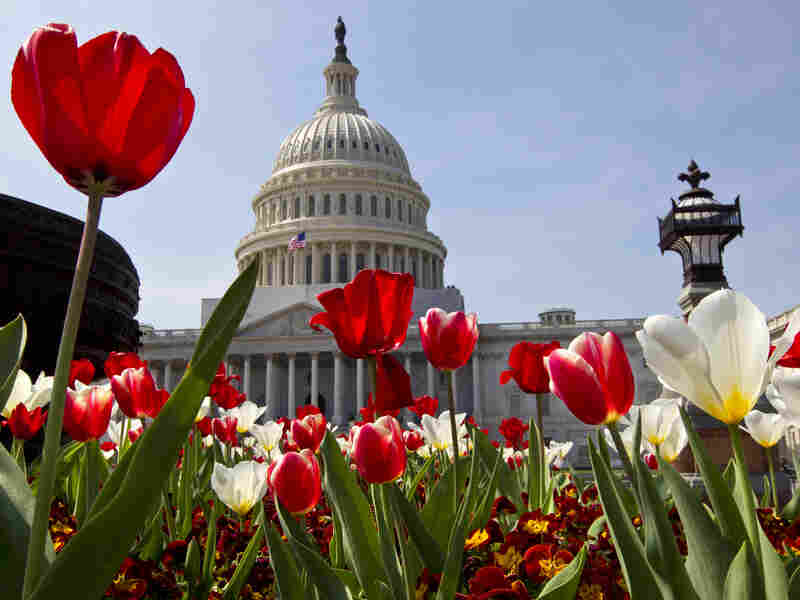 Flowers bloom at the U.S. Capitol in Washington, D.C., though the same can't be said of bipartisanship.