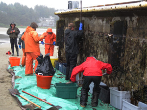 Workers from the Oregon Department of Fish and Wildlife remove marine organisms from the dock. Marine biologist John Chapman says the dock may have carried hundreds of species and millions of organisms across the ocean.