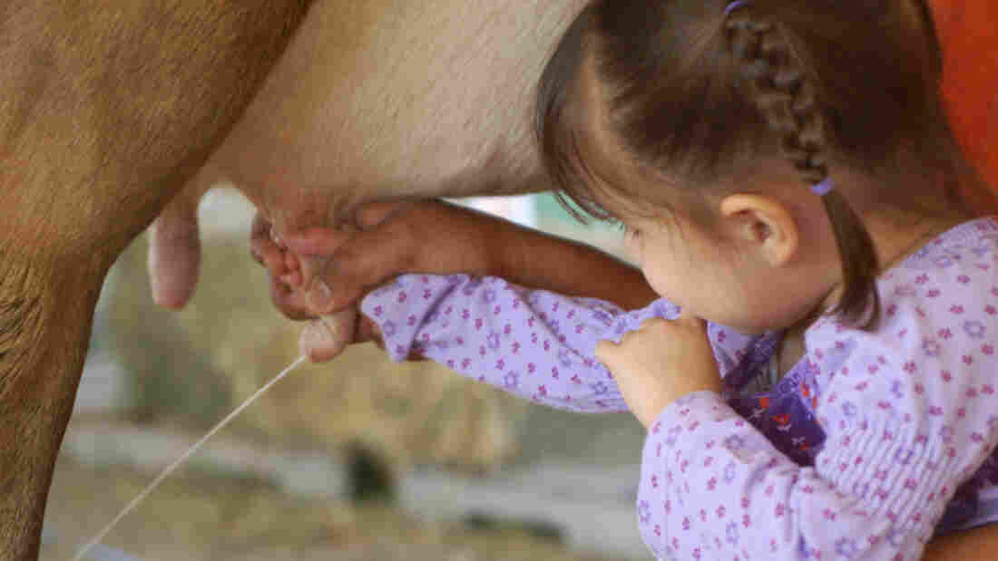 Contact with animals and dirty environments may be one reason farm kids are less likely to get allergies, researchers say.