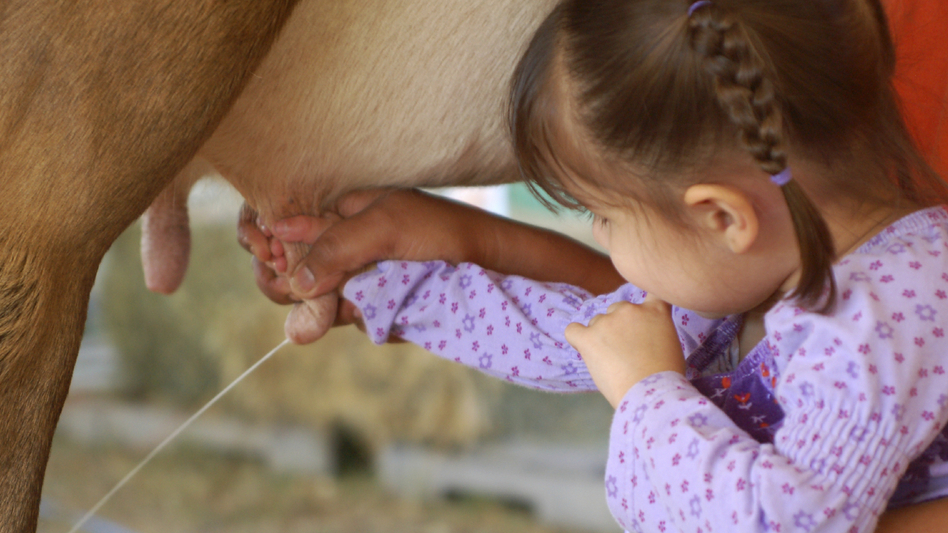 Contact with animals and dirty environments may be one reason farm kids are less likely to get allergies, researchers say. (iStockphoto.com)