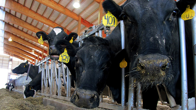 Dairy cows feed on a farm in Chilton, Wis., in May. The farm bill being considered by Congress, part of a massive package that could cost nearly $1 trillion over a decade, contains a number of provisions affecting dairies. (AP)