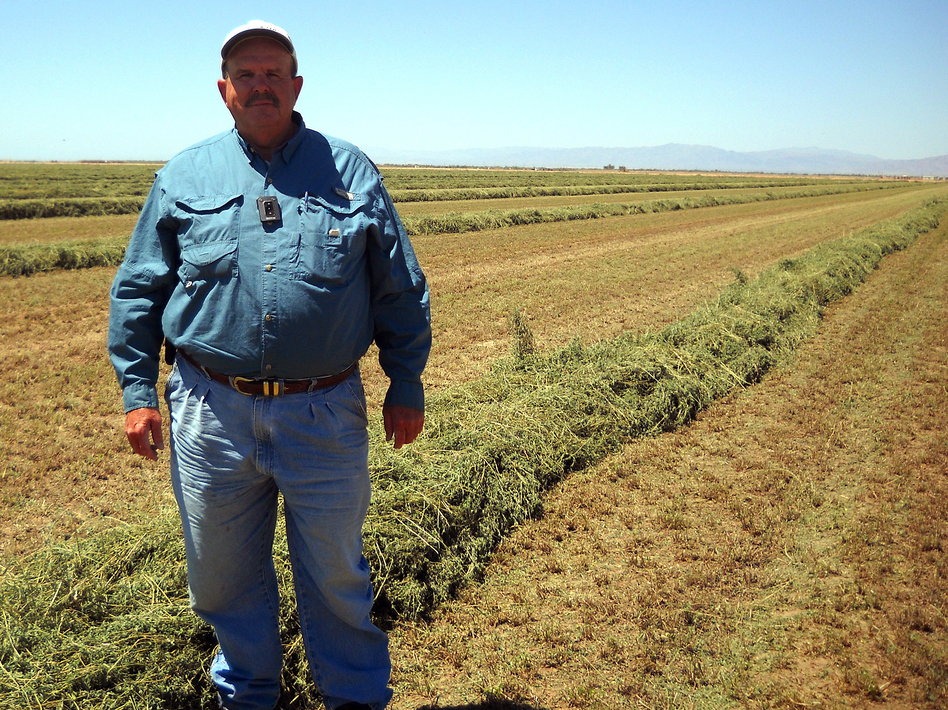 Farmer Al Kalin, 63, has about 2,000 acres of crops along the Salton Sea. He's concerned a water transfer agreement is helping speed the decline of the Salton Sea. (NPR)