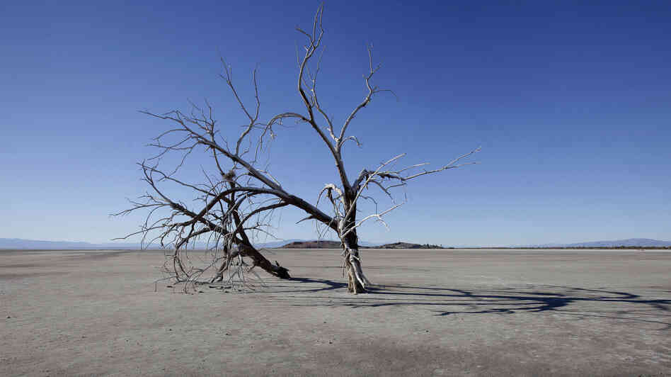 The barren earth and dead trees reveal the blight of the Salton Sea, where water conservation efforts are attempting to restore the once natural playground and tourist site in California.
