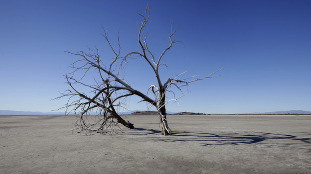 The barren earth and dead trees reveal the blight of the Salton Sea, where water conservation efforts are attempting to restore the once natural playground and tourist site in California. (AP)