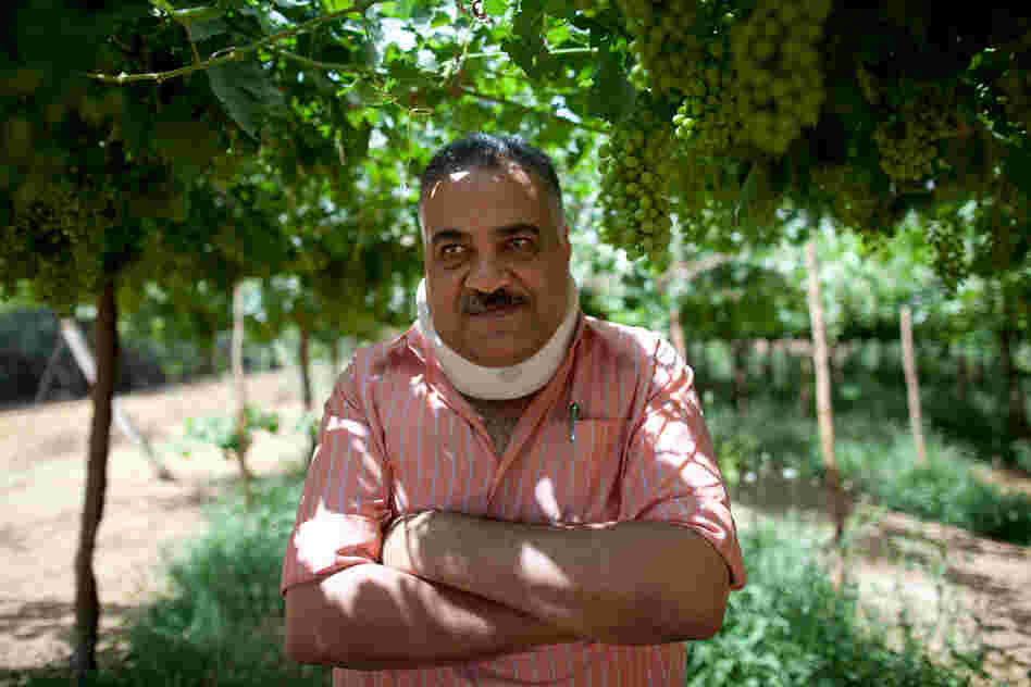 Engineer Mamduh Diab, chief of agricultural affairs for the South Valley Company, stands among grapevines on the company's land.