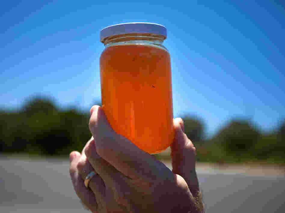 A jar of roadside honey from the Green Mountains in Libya.