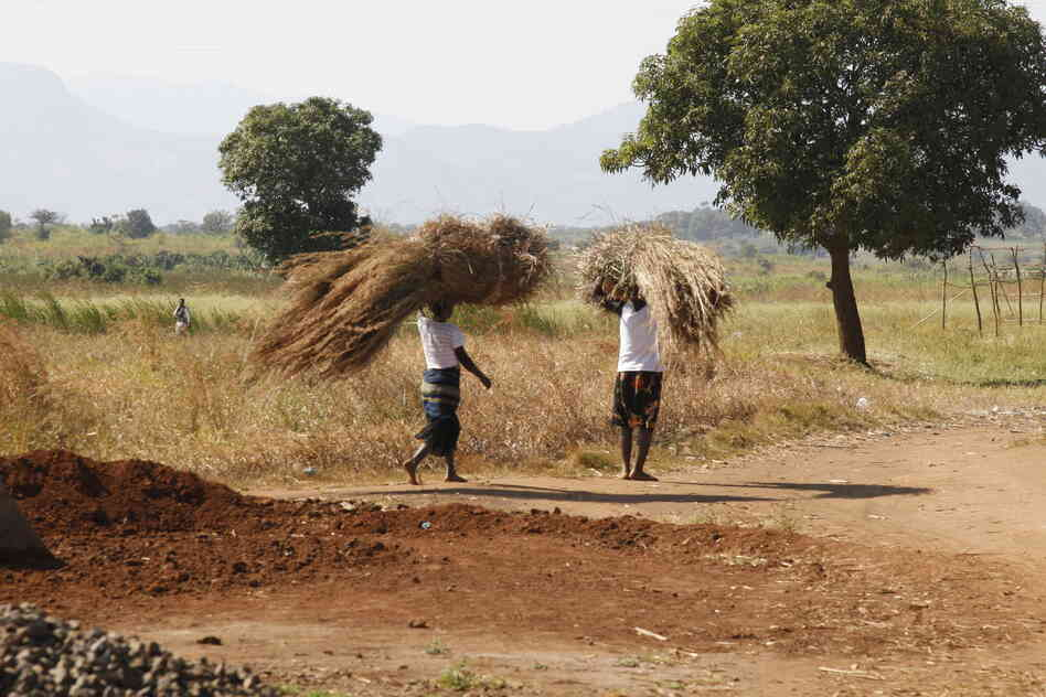 Farming, like most other tasks, is done by hand in rural Mozambique.