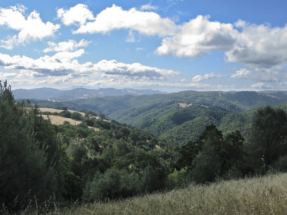 Coe Park is California's second-largest state park, spanning more than 87,000 acres. (NPR)