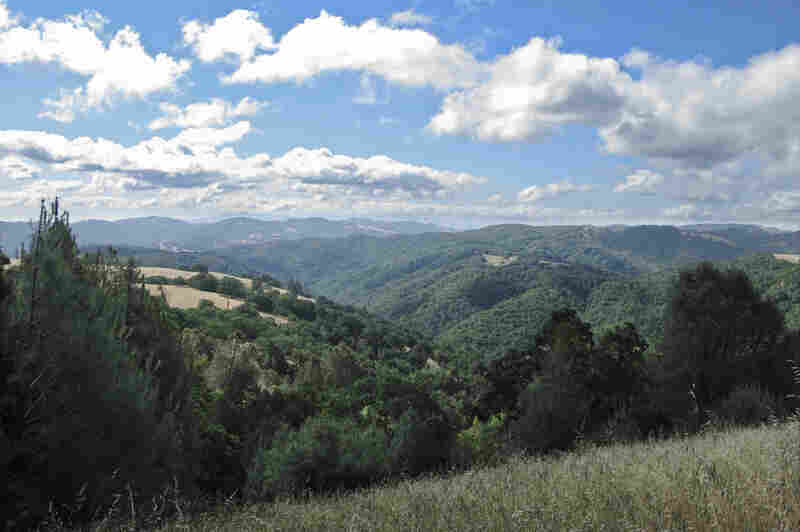 Coe Park is California's second-largest state park, spanning more than 87,000 acres.